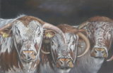 Longhorn bull and cows