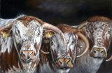 trio of longhorns