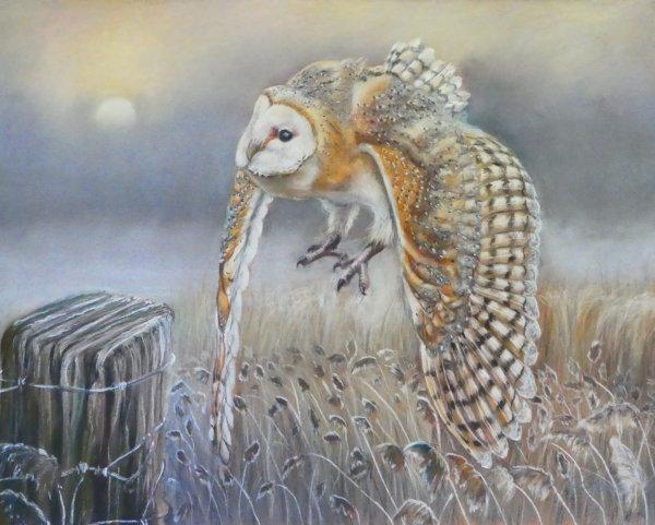 Barn Owl over the Fens