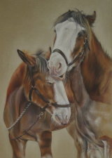 Clydesdale friends