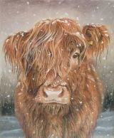 Highland Calf Christmas Card