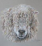 Grey-faced Dartmoor Sheep