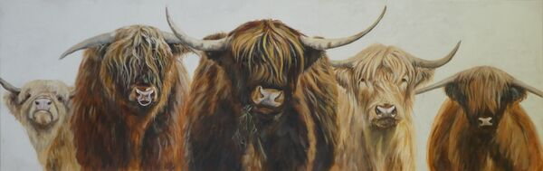 Five Highland Cattle
