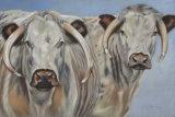 Lincolnshire Longhorns