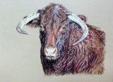 Mr. Simmon`s bull