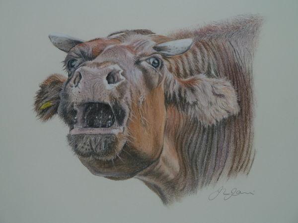 Noisy cow