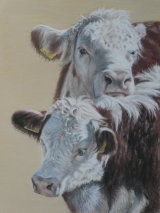 Two Hereford calves in the sun.