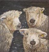 Trio of Grey-faced Dartmoor Sheep