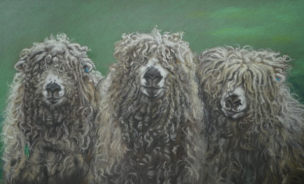 Vespasian boys- Grey-faced Dartmoor rams