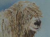 Grey-faced Dartmoor Sheep 2