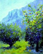 Orange grove, Peloponnese