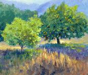 Orange grove in Neapoli