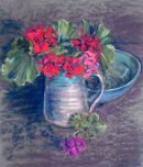 Geraniums in Jug