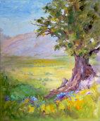 Old oak tree above Catharo Plateau
