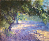Shady olive grove