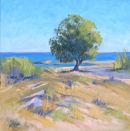 Tamarisk tree, Malia, Crete.