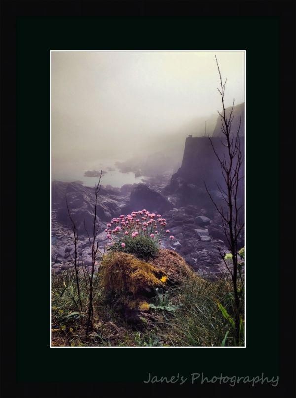 April Sea Mist (Black)