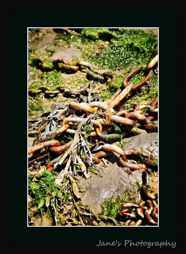 Rust and Seaweed (Black)