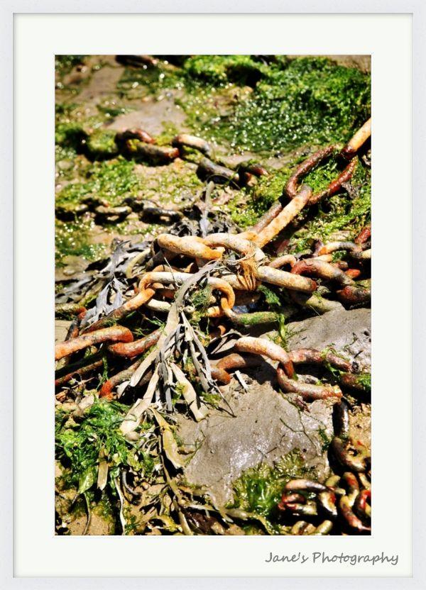 Rust and Seaweed (White)