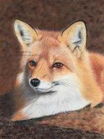 Foxy Lady !