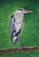 `The Heron`