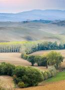 Tree Landscape, Tuscany