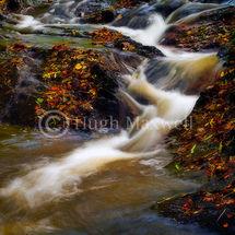 Autumnal Stream