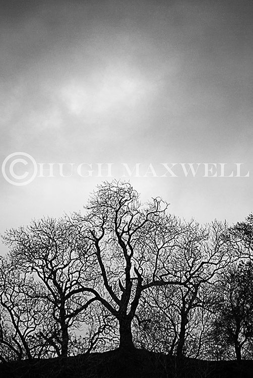 Silhouetted trees at the Laggan