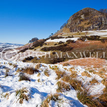 A carpet of snow