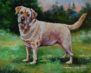 Paddy (SOLD)