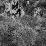 Rocks and Grass, Kerry