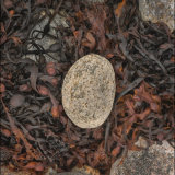 Gneiss Nest, Harris.