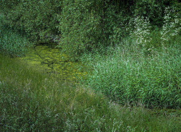 Frog Heaven, Grantham Canal.