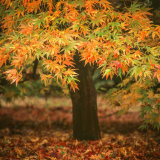 Autumn at Westonbirt.