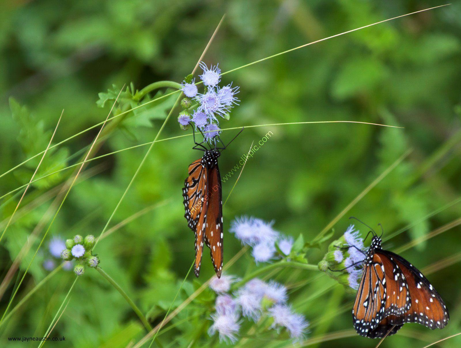 14. Phoenix - Botanical Gardens