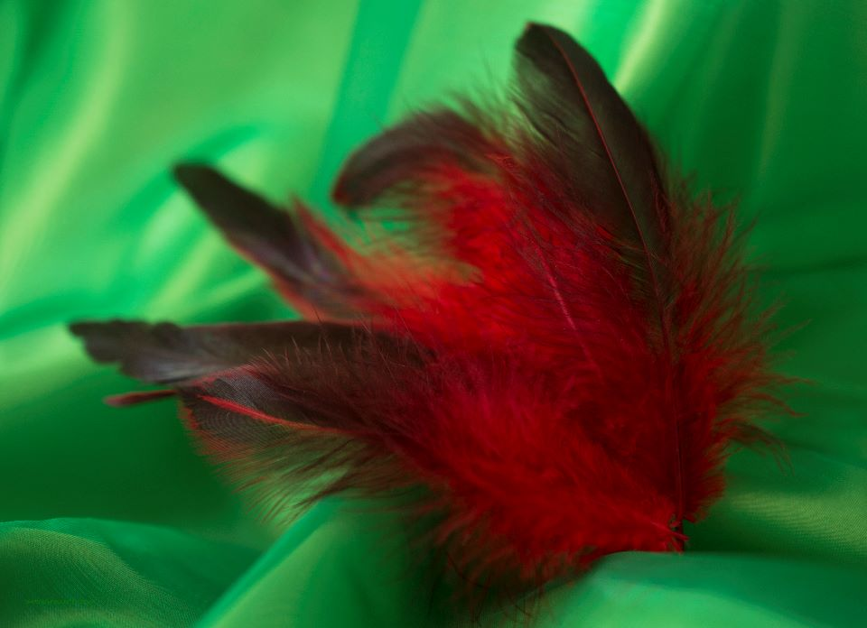 Red Rooster Feathers - two