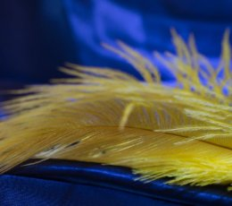 Yellow feather on blue satin