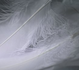 Two white feathers