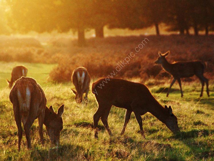 4pm October in bushey Park