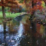 Autumn in Bushey Park