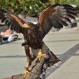 Holiday Hawk