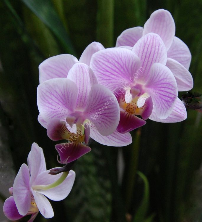 My mother in law's orchids