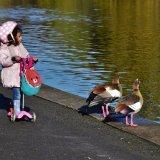 Regents Park Bird Hunting
