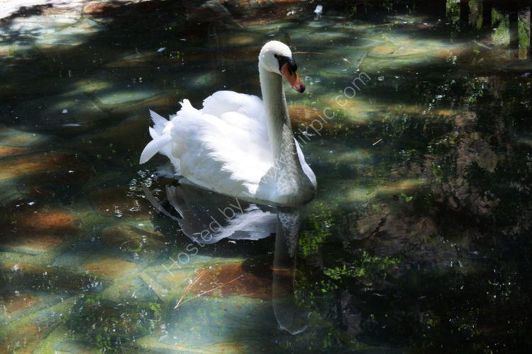 The White Swan Gran Canaria