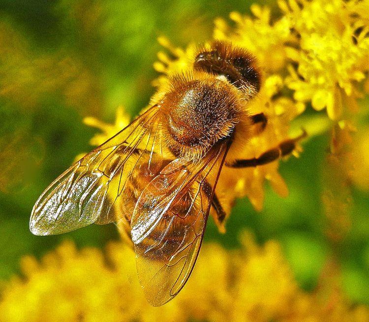 The  Bee in My Garden