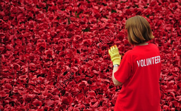 We Will Remember Them - Tower of London