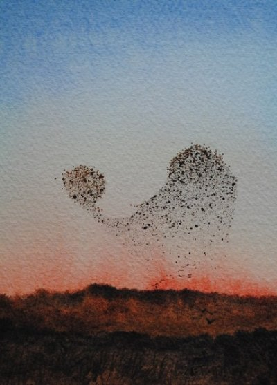 Starling Murmeration At Sunset