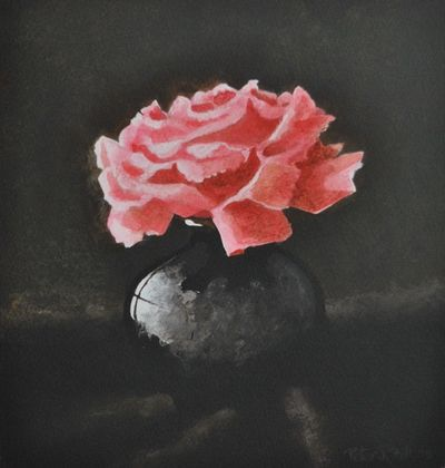 Rose From a Scotter Garden.  (Finished for the Art Group tutorial Wednesday 24th July 2019)