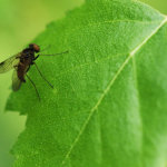 Unknown Fly Type