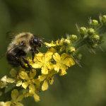 Unknown Bee Species